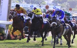 Lucky Valentine et 4 autres chevaux à la retraite